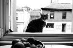 15 Cat on sill 2